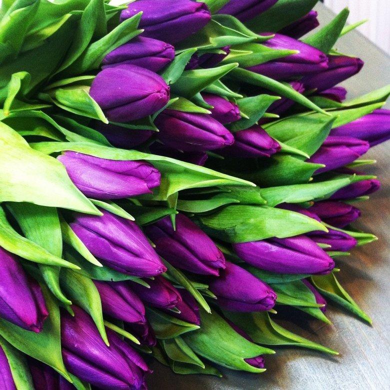 Гиф работе, открытки фиолетовые тюльпаны