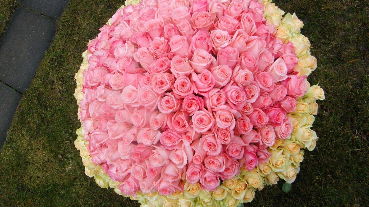 Картинки самой большой розы