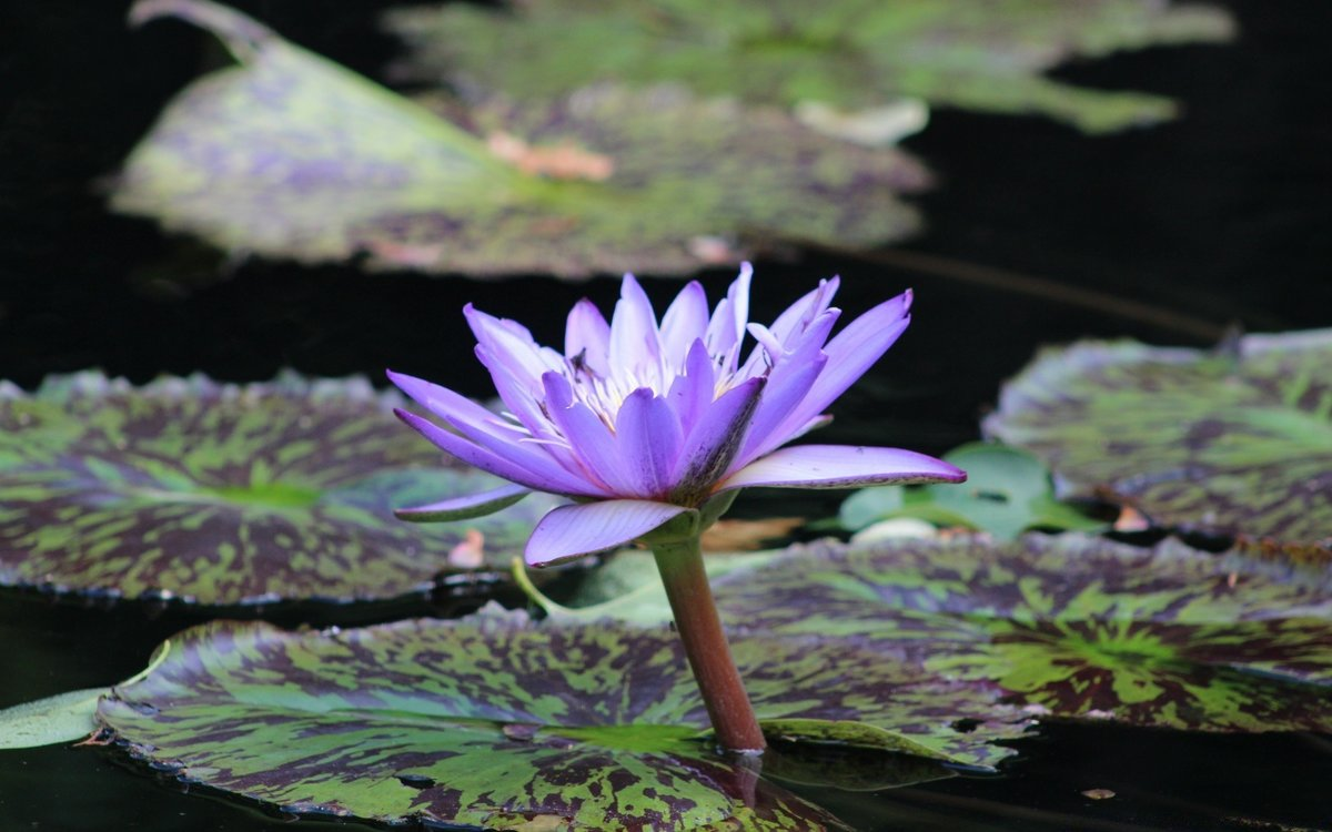 забудьте картинки с болотными лилиями оказался зале звезда