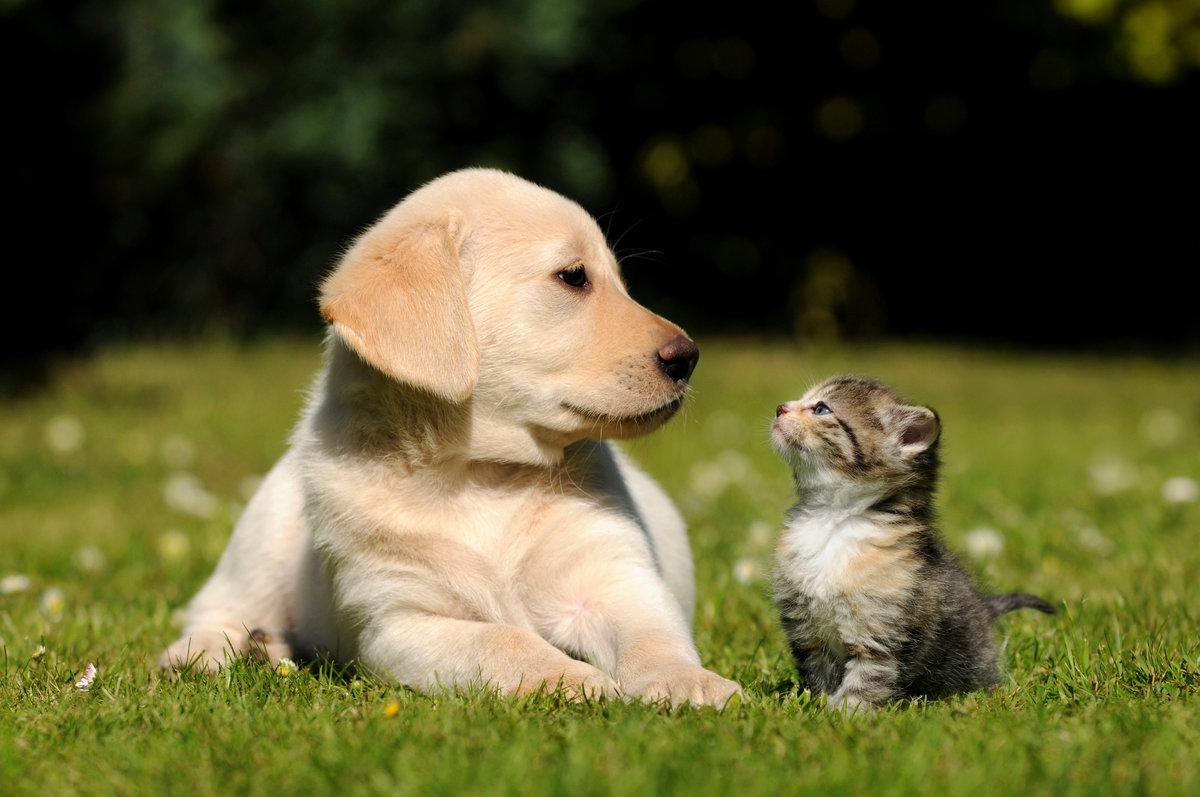 Картинки с кошками собачками, завершением рабочего дня