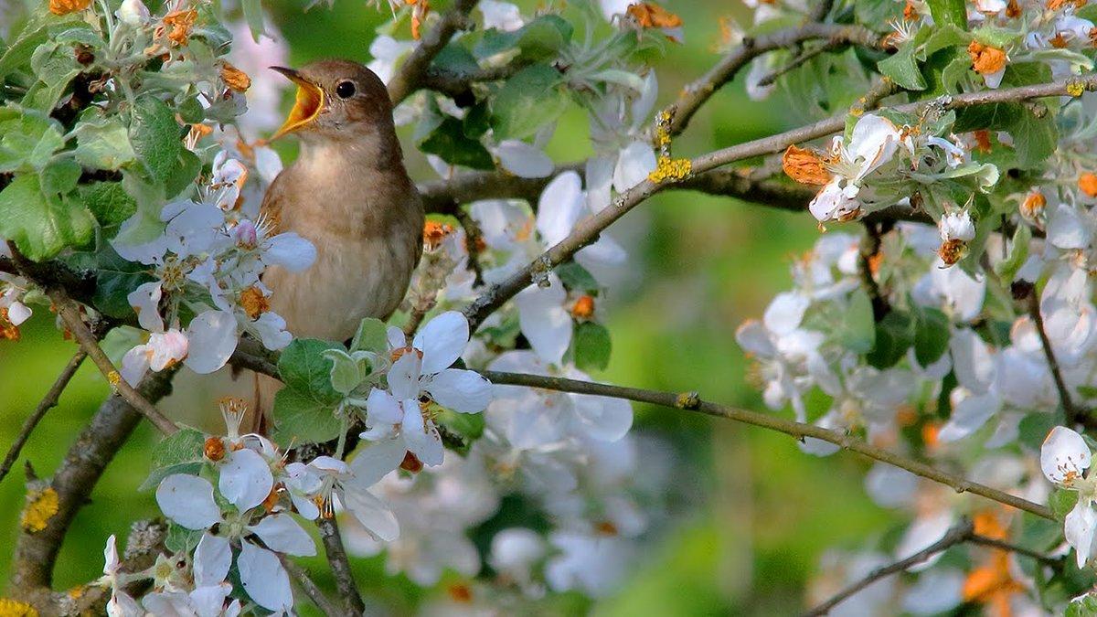 каталоге картинки птицы в весеннем лесу картами картинками