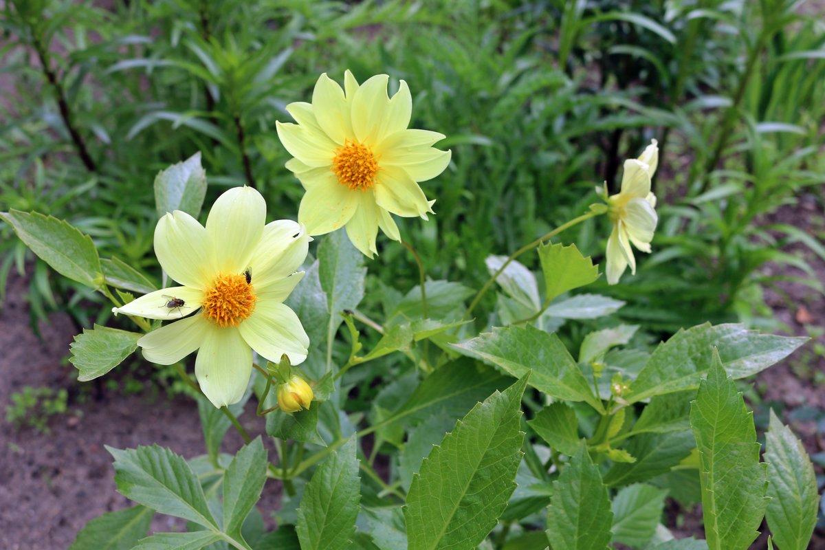 Цветок семейка фото