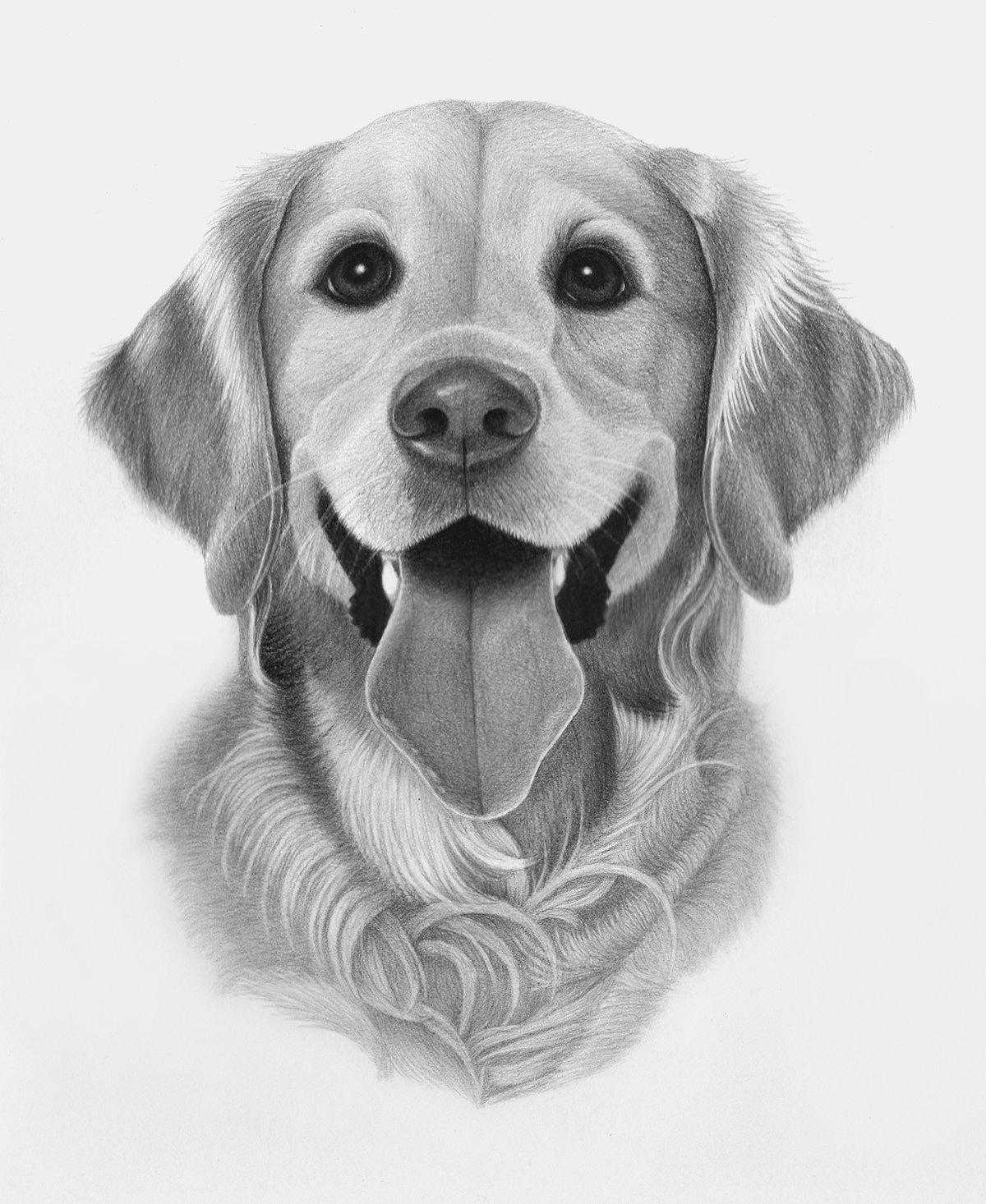 Напечатать открытки, рисованные карандашом картинки собачек прикольные