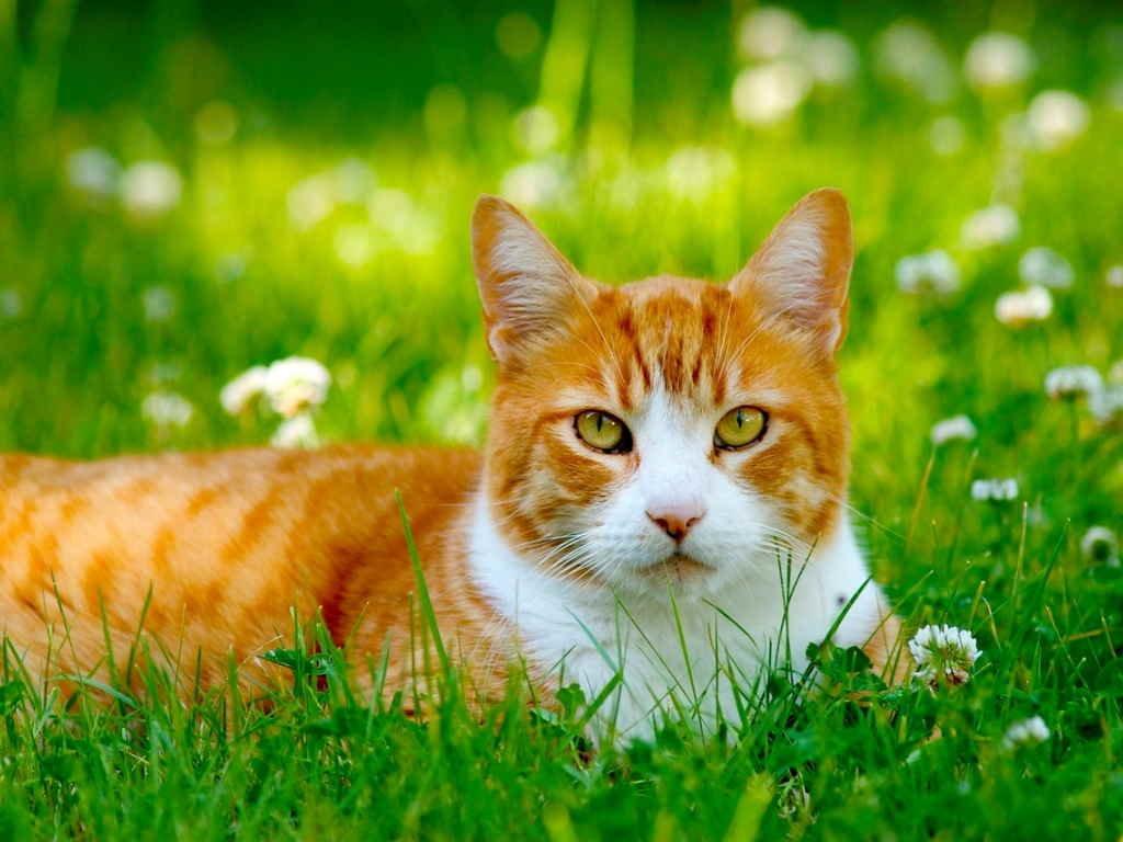 дополнении летний кот картинка которого
