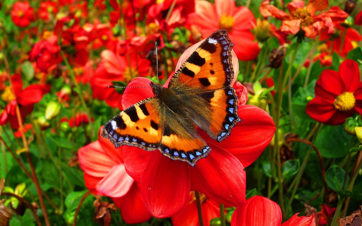 Бабочка и цветы картинка