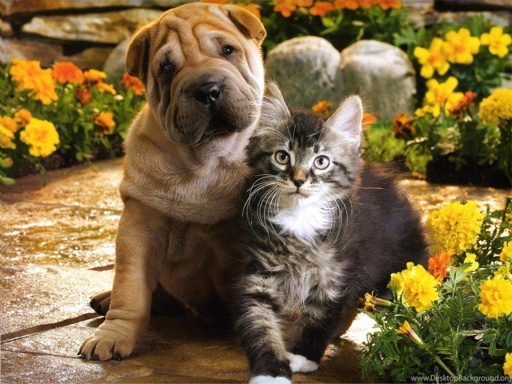 Картинки кошек и собак, гномиков анимация