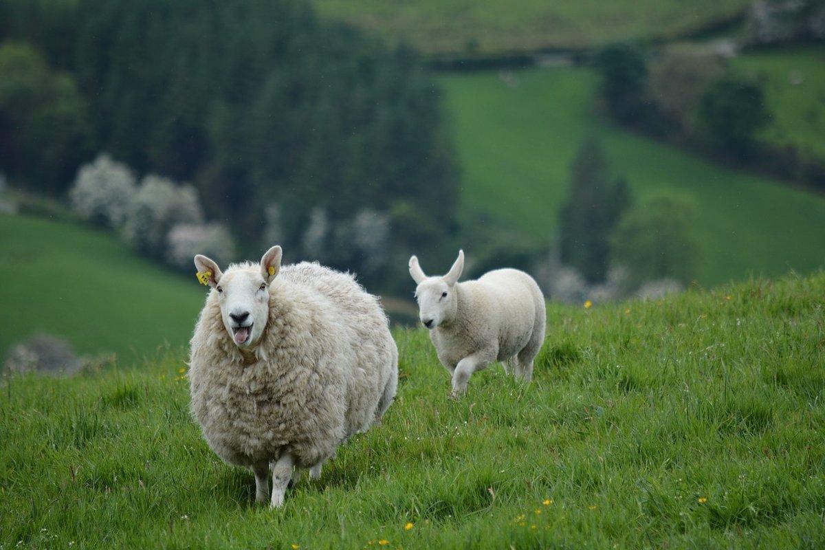 чтобы внешняя фото животного мира ирландии грунт скорее