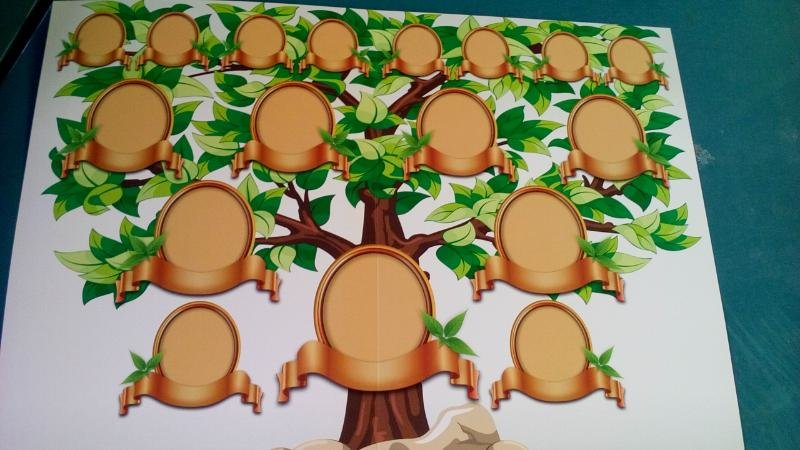 родственное дерево рисунок фото своими руками выращивание чаще