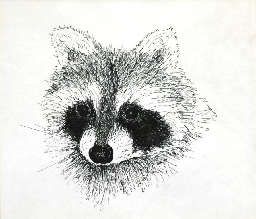 Картинка милого енотика для срисовки