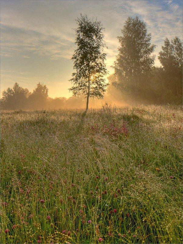 По утренней росеФото, автор iuspas (Юрий Спасенников) на Яндекс.ФоткаÑ