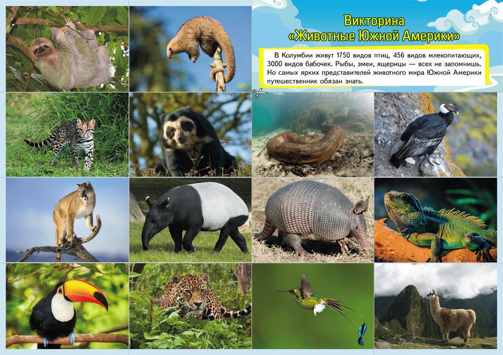 Фото животные южной америки список