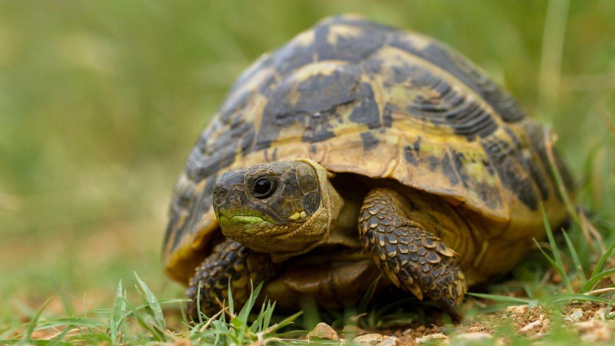 Черепахи картинки фото, прекрасен этот