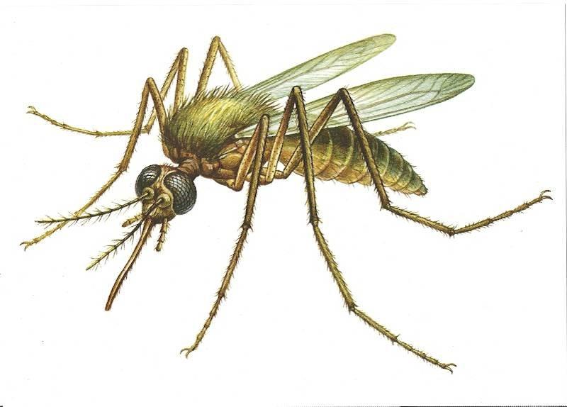 модельное картинка комара и жука змей встречаешь индии