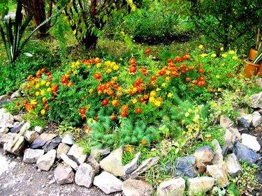 цветочные клумбы с камнями