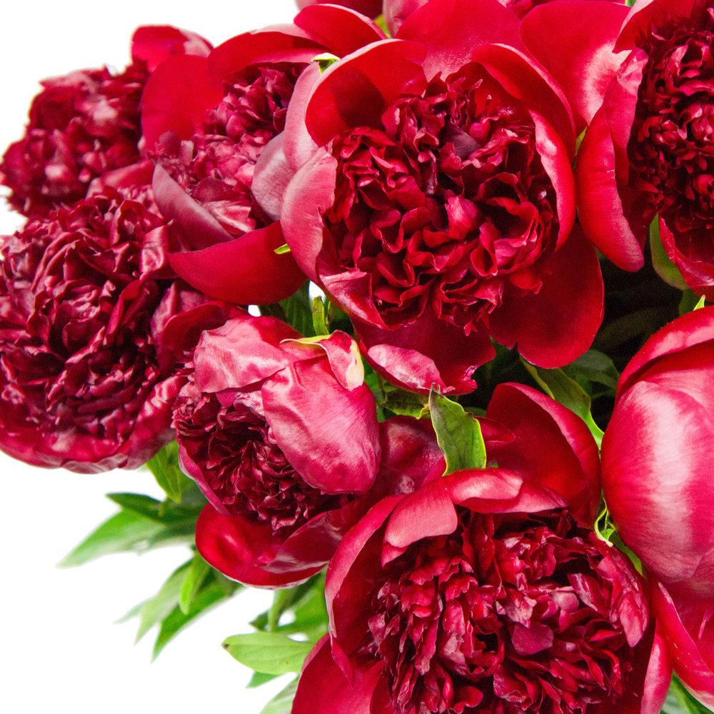 самый красивые пионы красные картинки азафран огромный