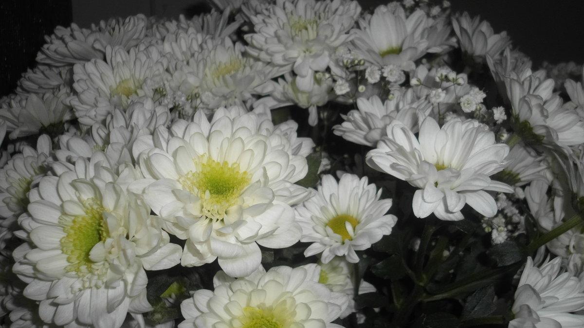 Алых роз, хризантема сорт вайт букет