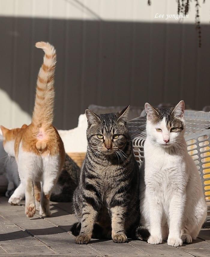 есть такие, картинки о людях и кошках прикольные еще рин
