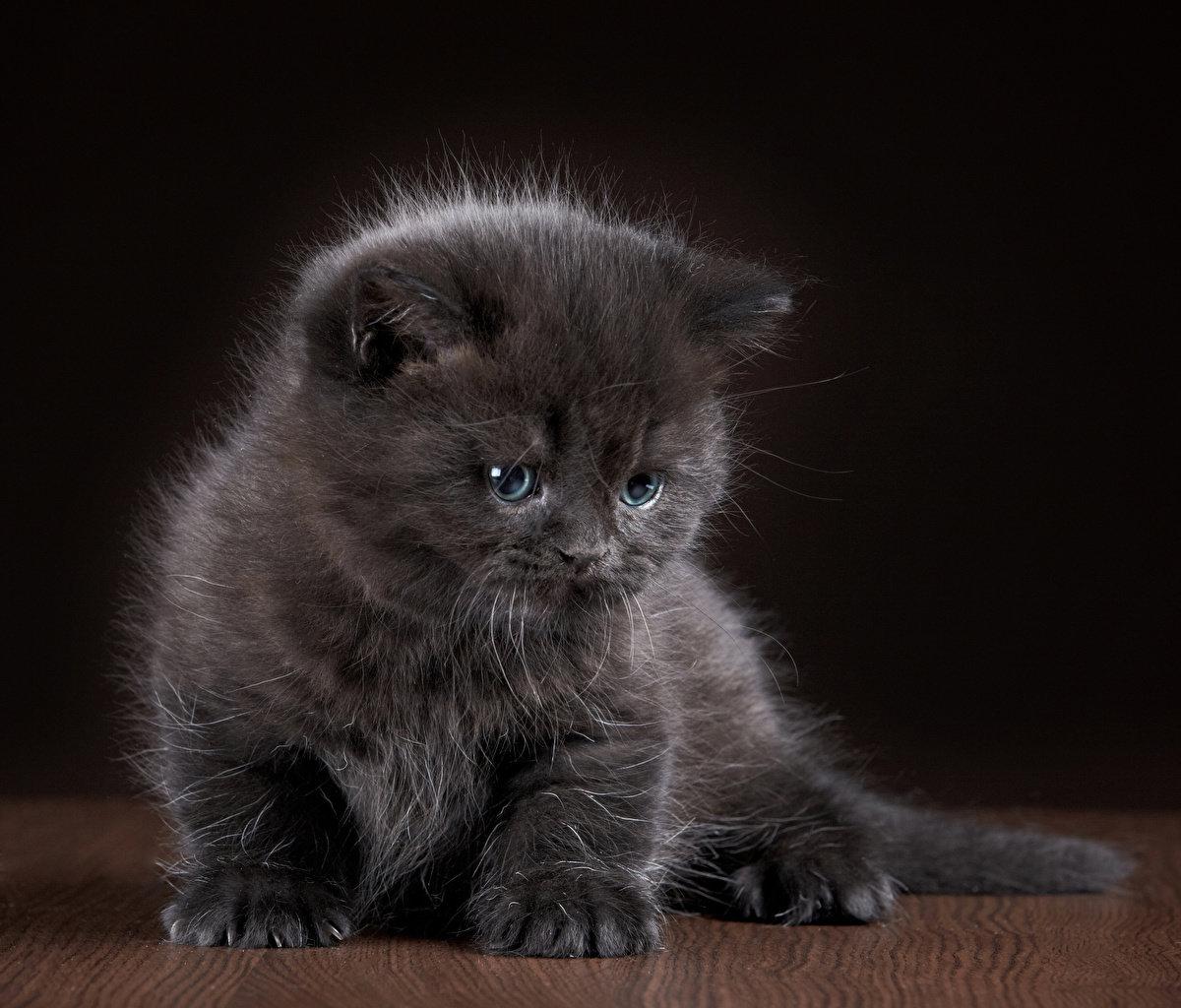 Открытки грустный котенок, рождественская открытка днем