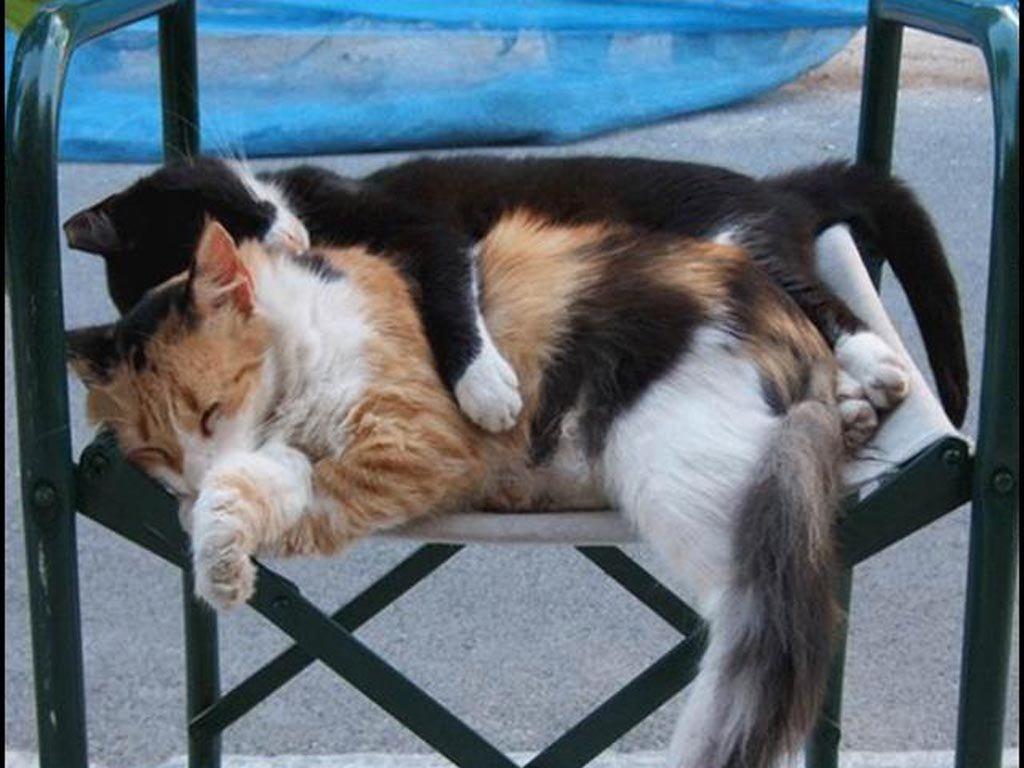 котики смешные спят фото до слез появления явных признаков