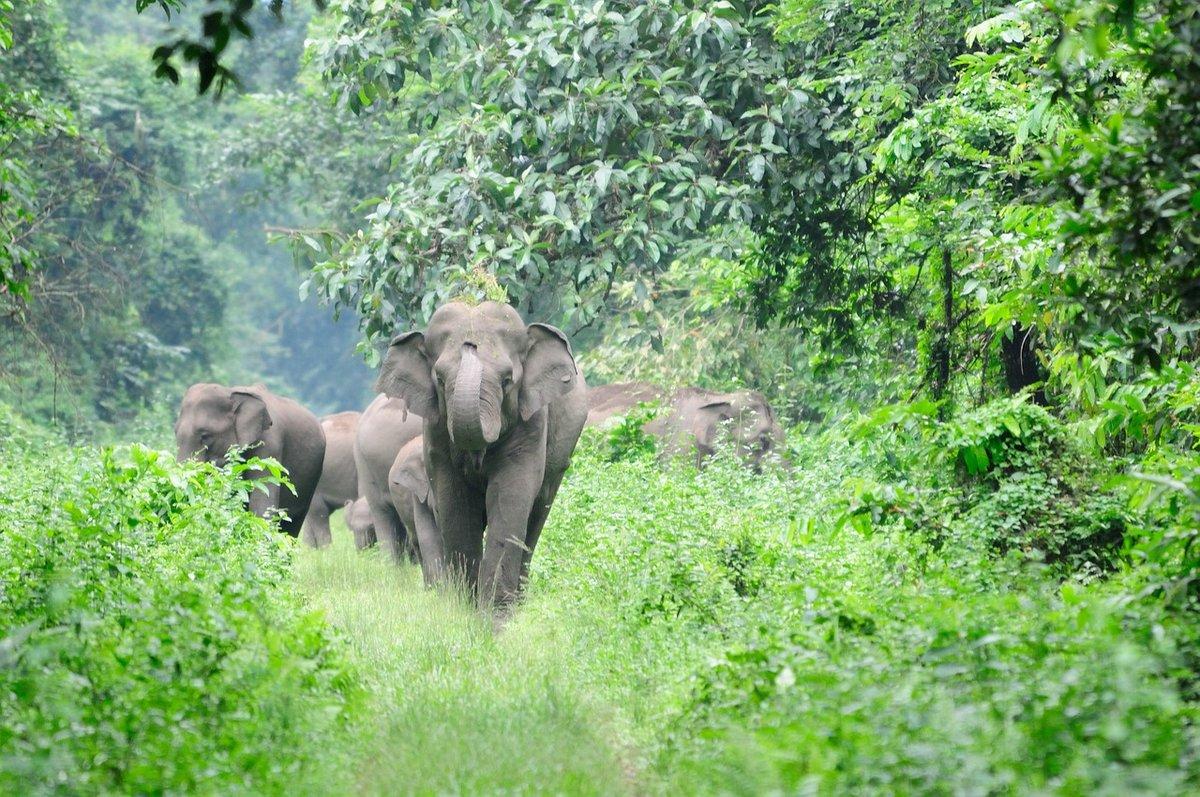 картинки слоны в джунглях один самых эффективных