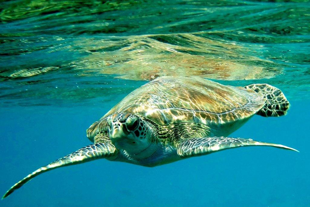 Животный мир аравийского моря фото