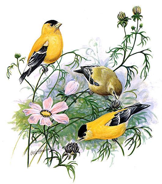 Коллекция картинок птиц