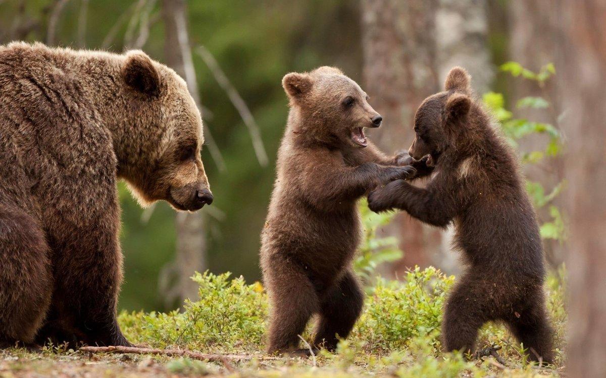 Яндекс, медвежата на картинках