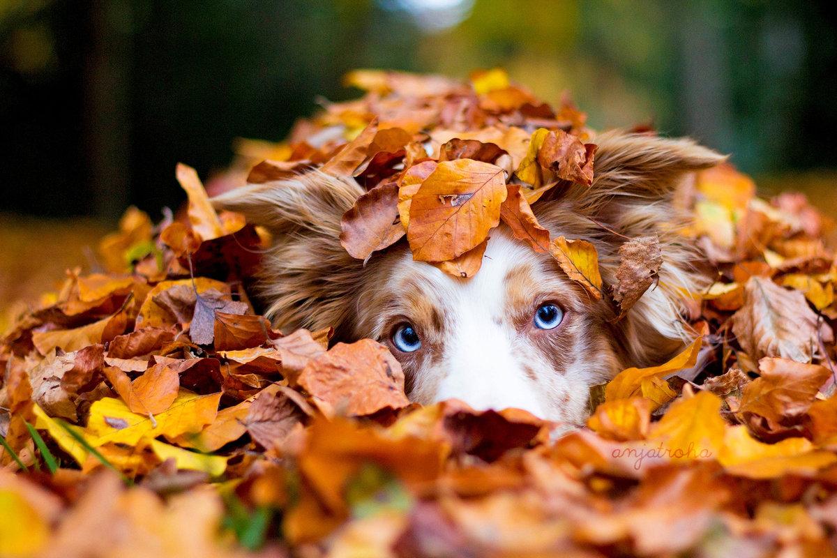 Открытки животные осенью, открытки днем