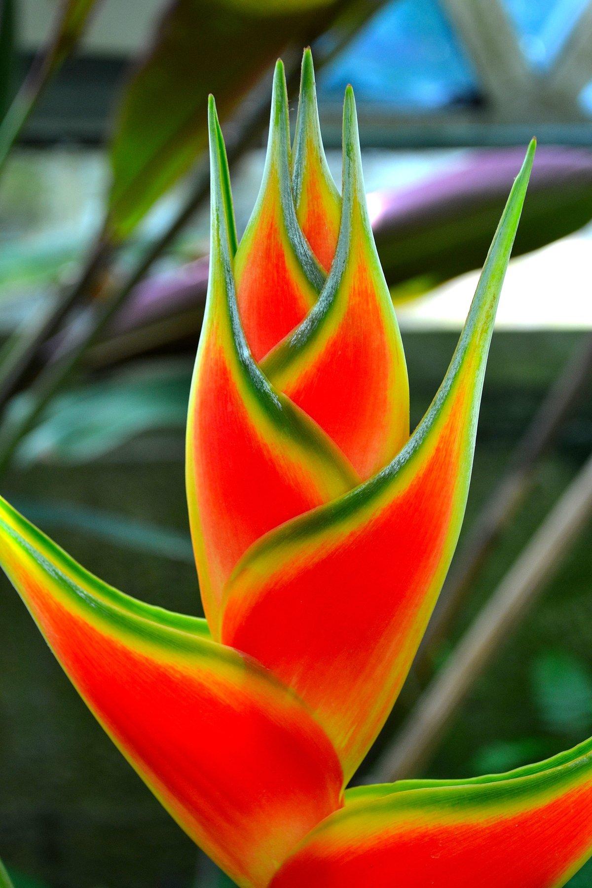 Картинки самых красивых цветов и их названия