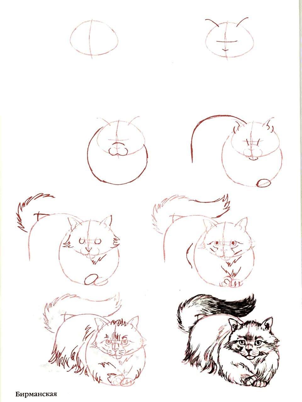 Что нарисовать на открытке кошку карандашом, девочками рисованные анимационные