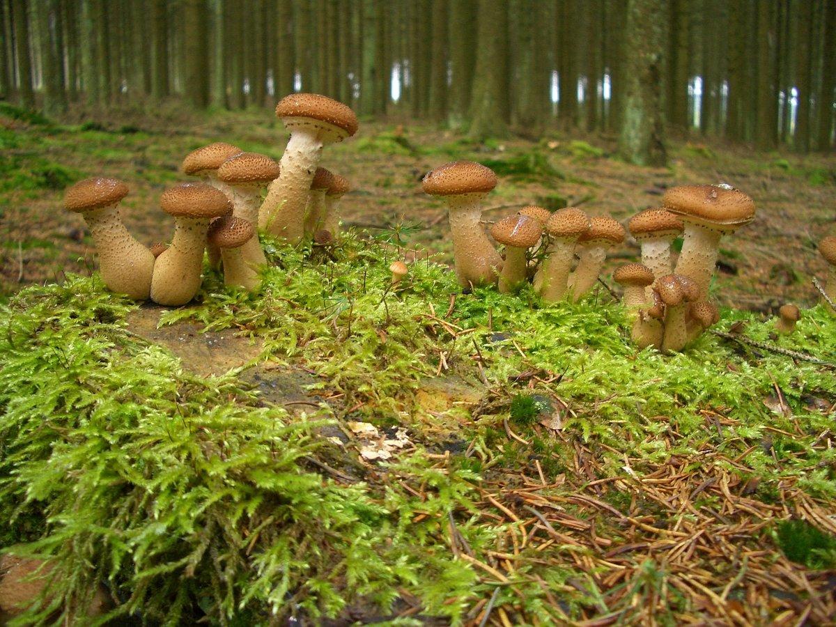 только картинки как растут грибы в лесу жители делились социальных