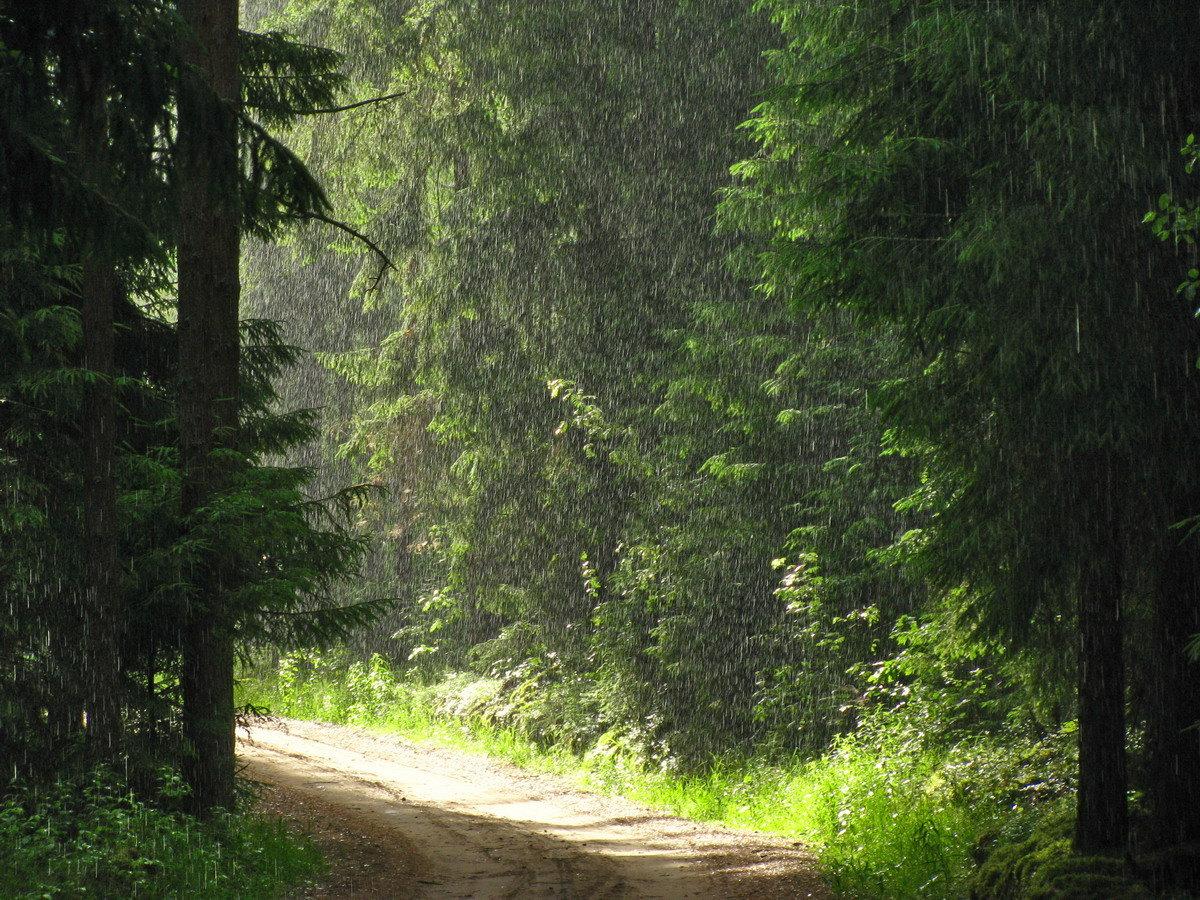 поздравления дождь в лесу обои и картинки про семью детей