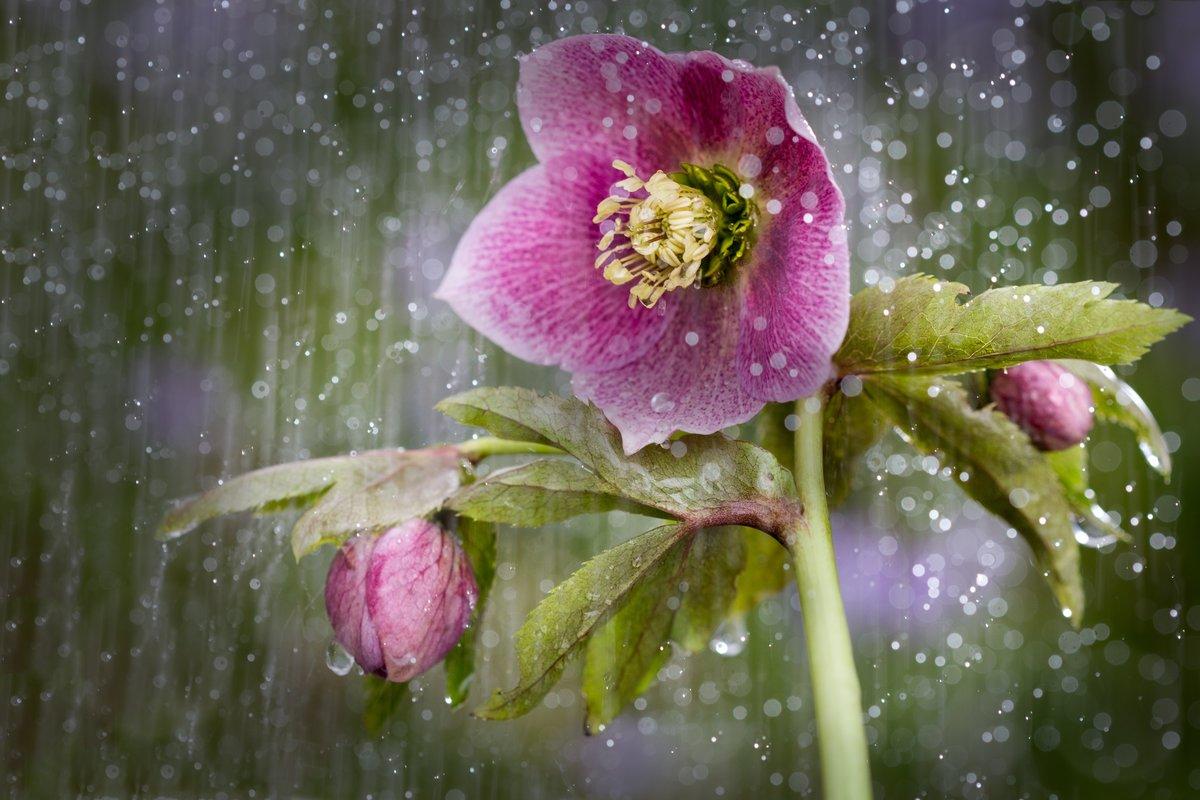 фото красивых цветов и дождь расскажем, как