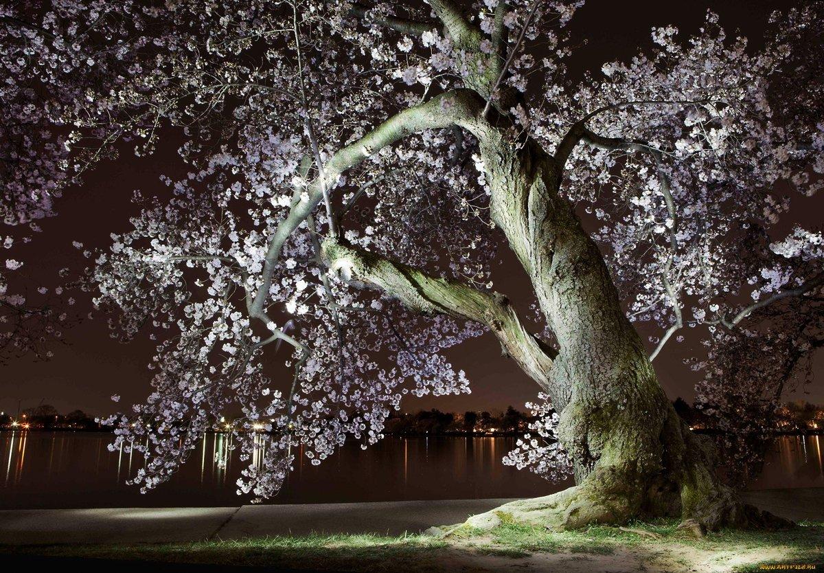 Весенняя ночь картинки весенняя ночь картинки