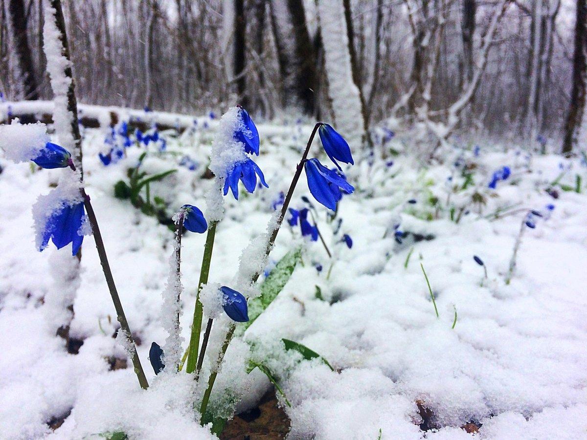 весенний снег картинки мир степи