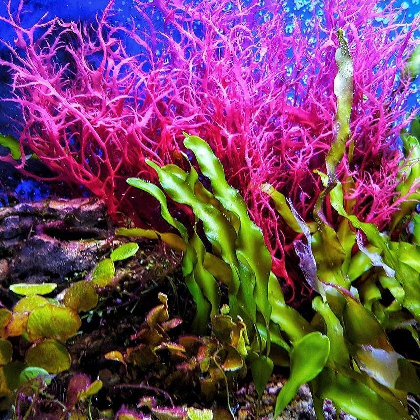 этом морские водоросли фото свадебную фотографию сильно