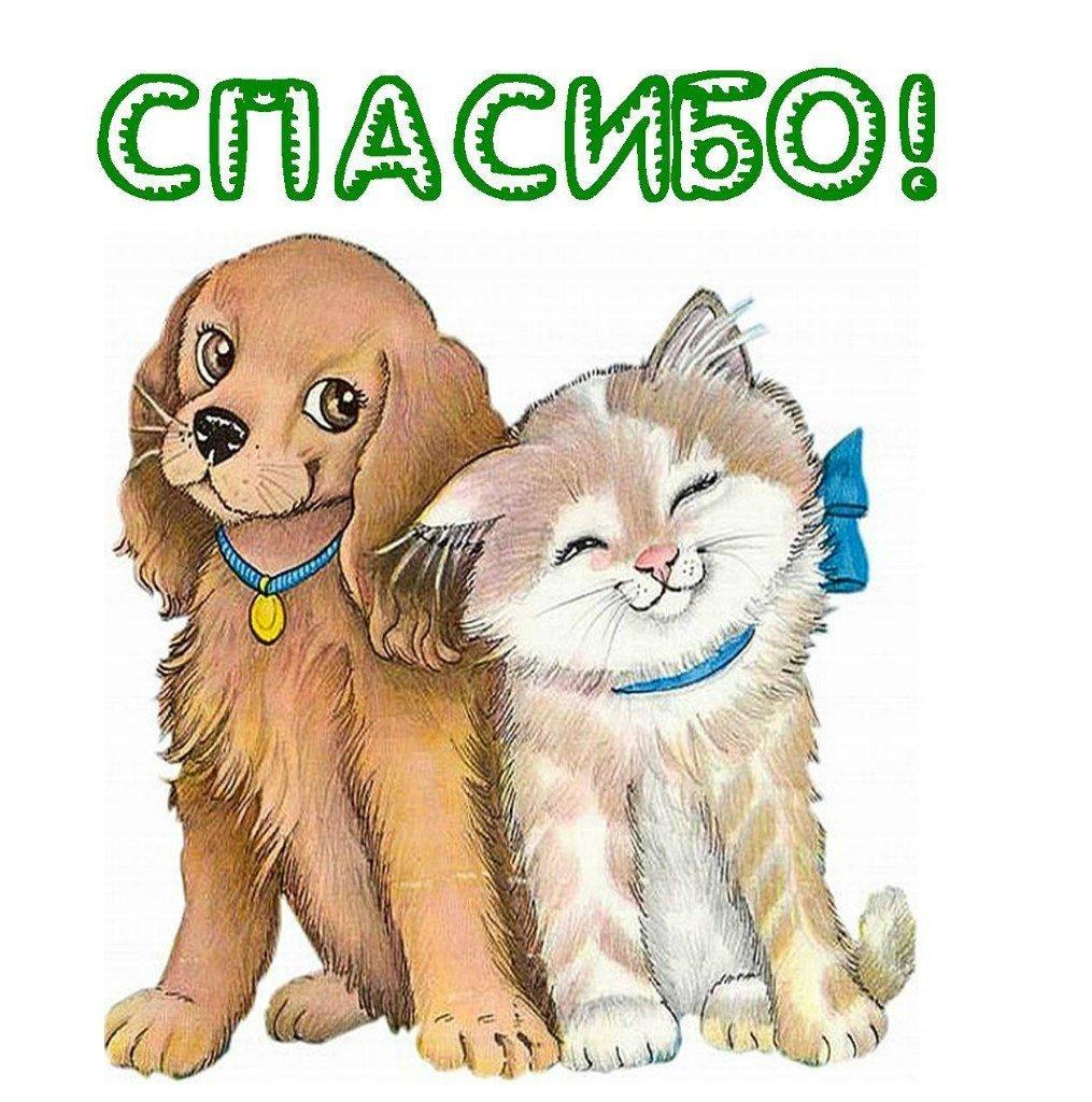 Спасибо открытки с животными, задний фон смм