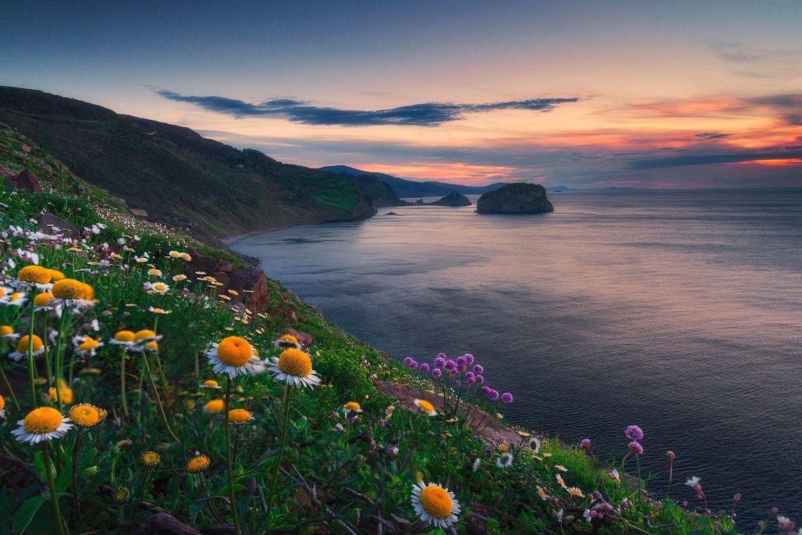 Картинки природа море цветы, надписью днем рождения