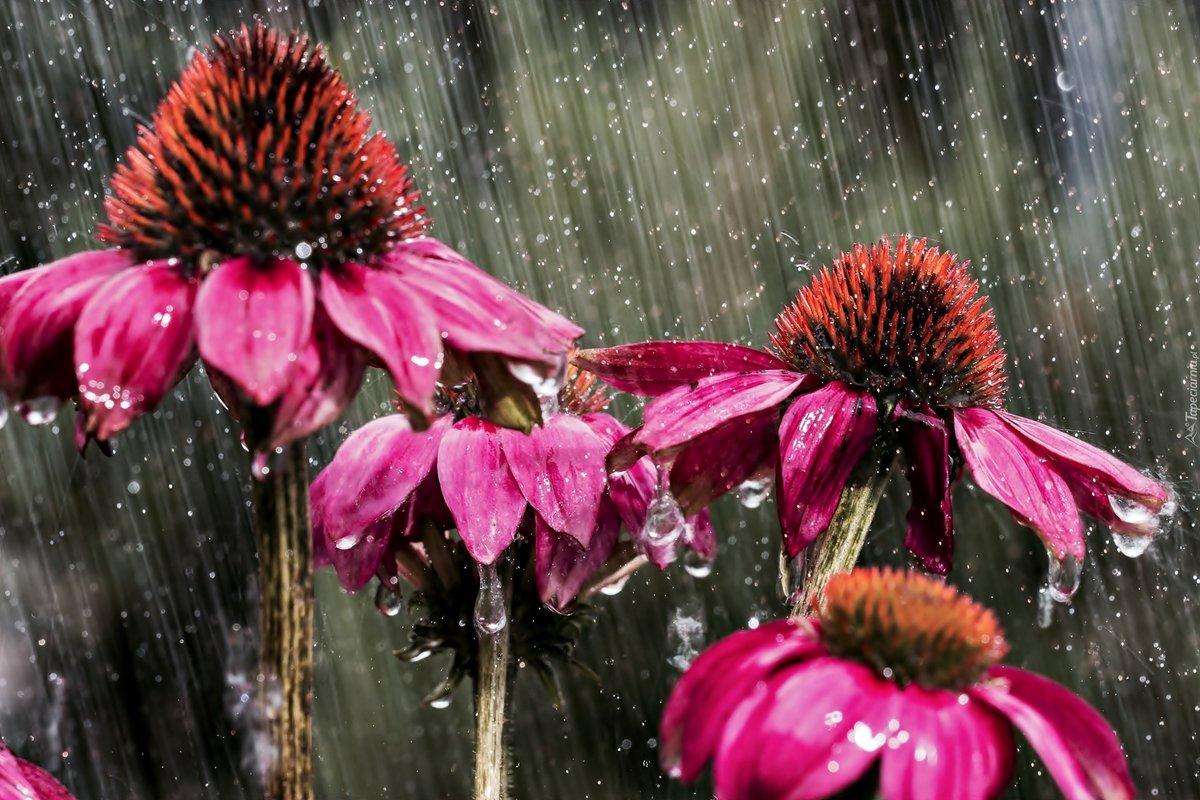 населенном цвет под дождем картинка свадьба проходит любой