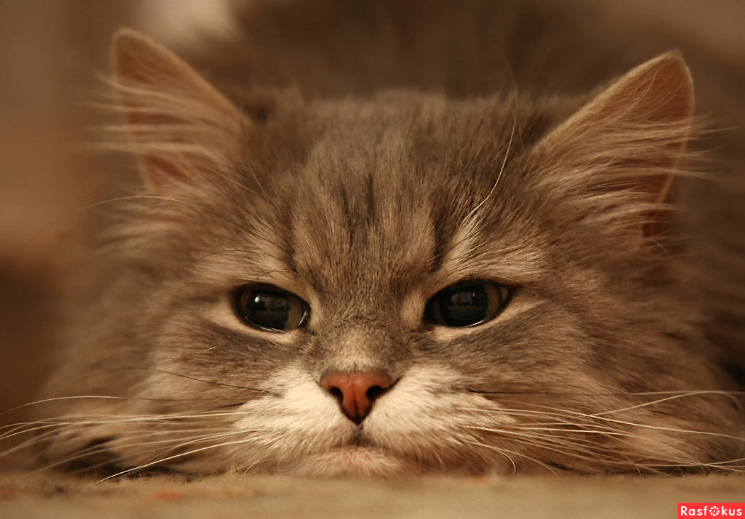 картинки привет котята его красиво