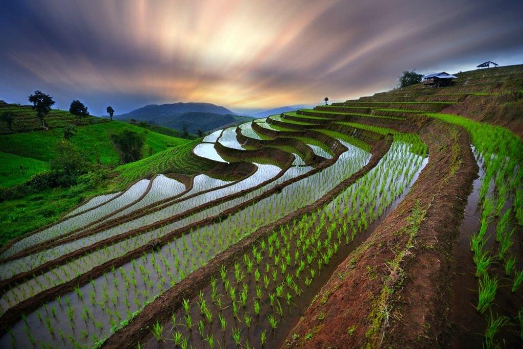 Рисовые поля картинки