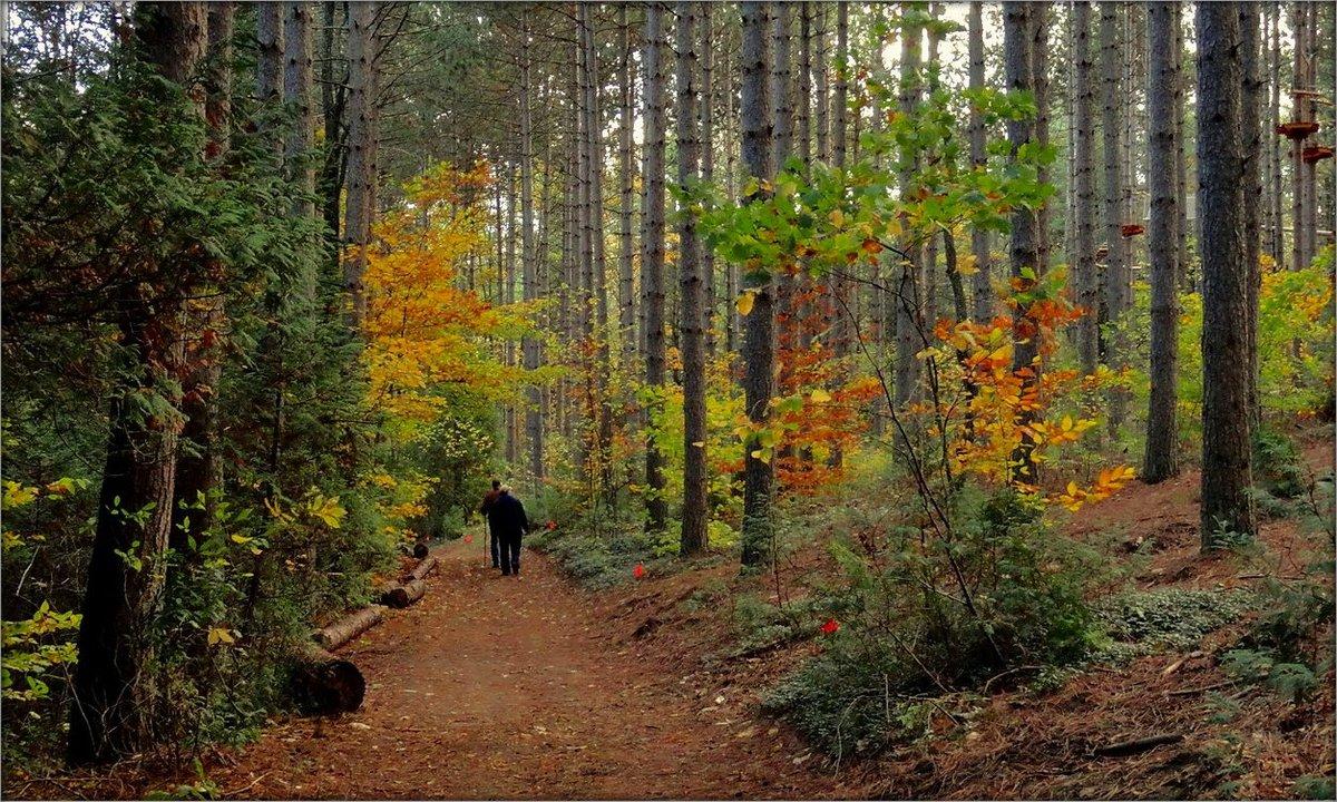 Картинки соснового бора осенью, днем