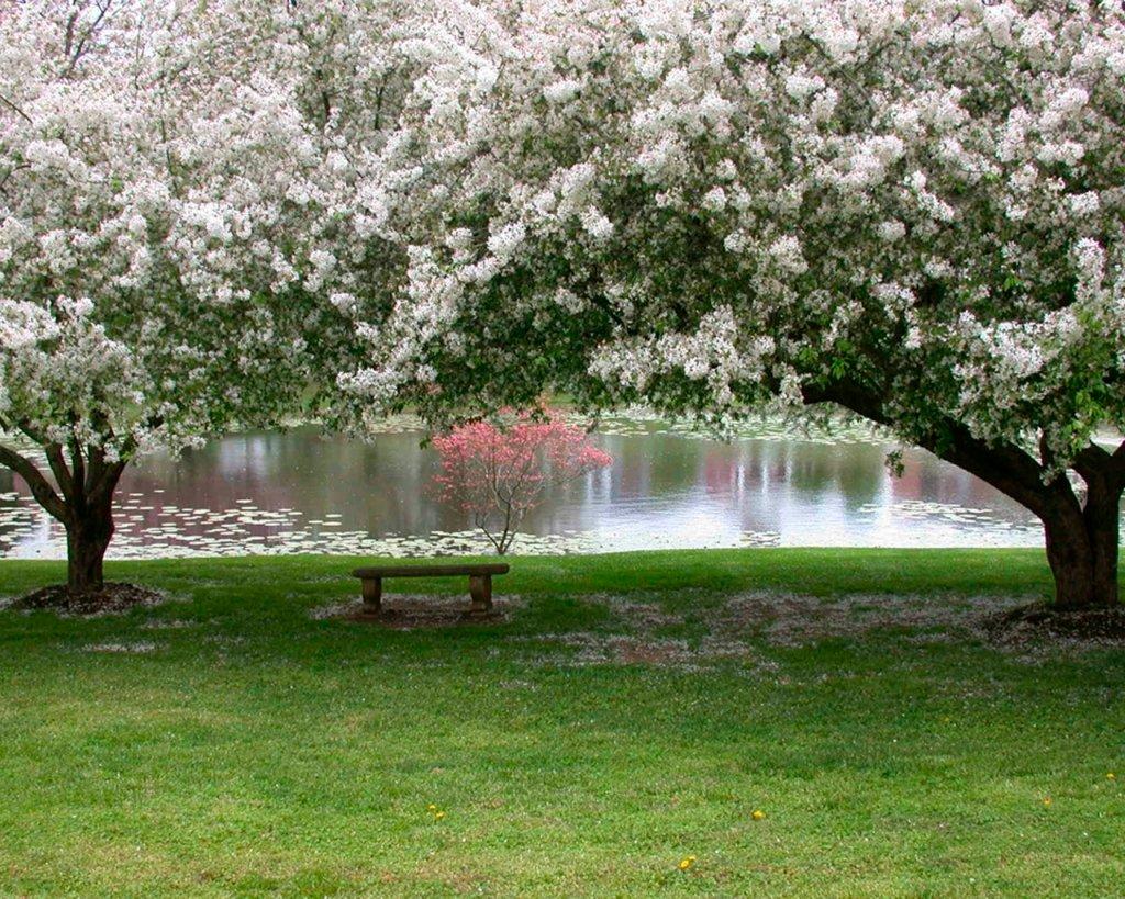 Открытки яблоневый сад, коллегам мая