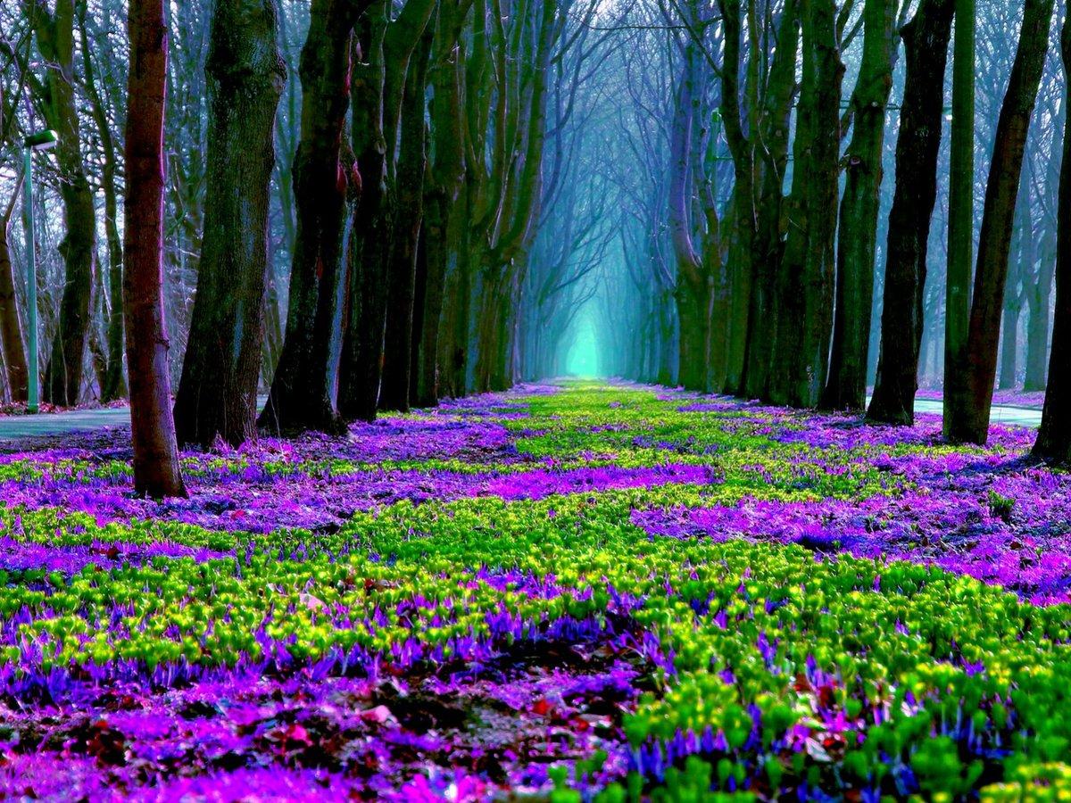 Картинка лес с цветами