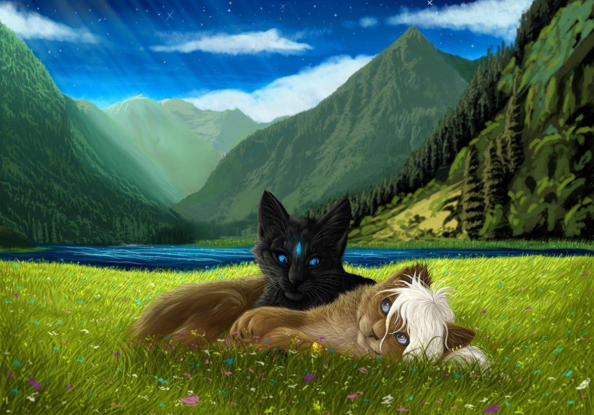 картинки с котами в горах презервативов
