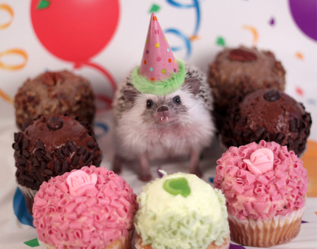 Картинках для, открытка с днем рождения животные