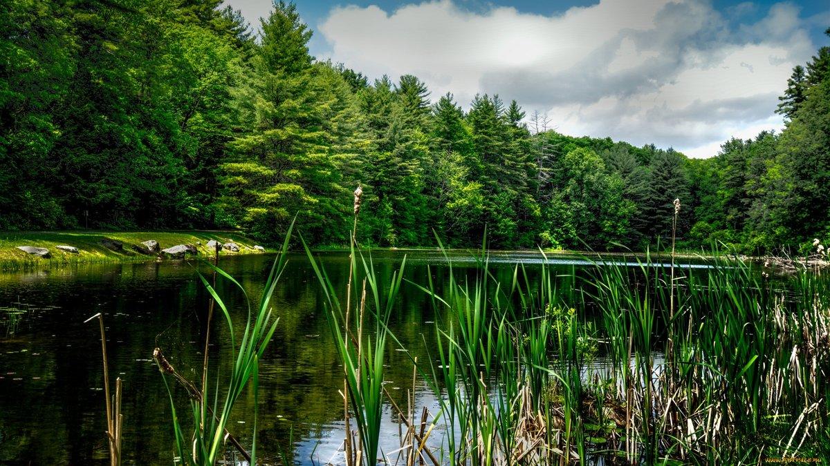 обеспечивают красивые картинки озеро лес любви
