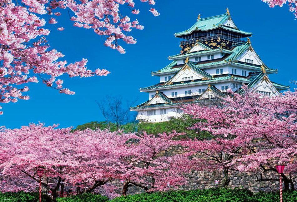 торты картинка пагода и сакура счет