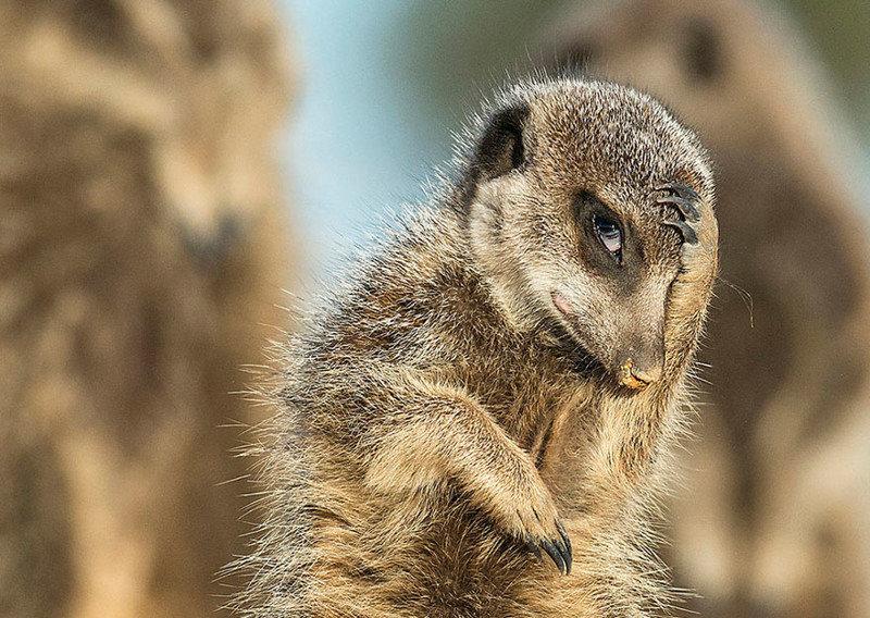 Смешные фотографии дикой природы   OllyClub