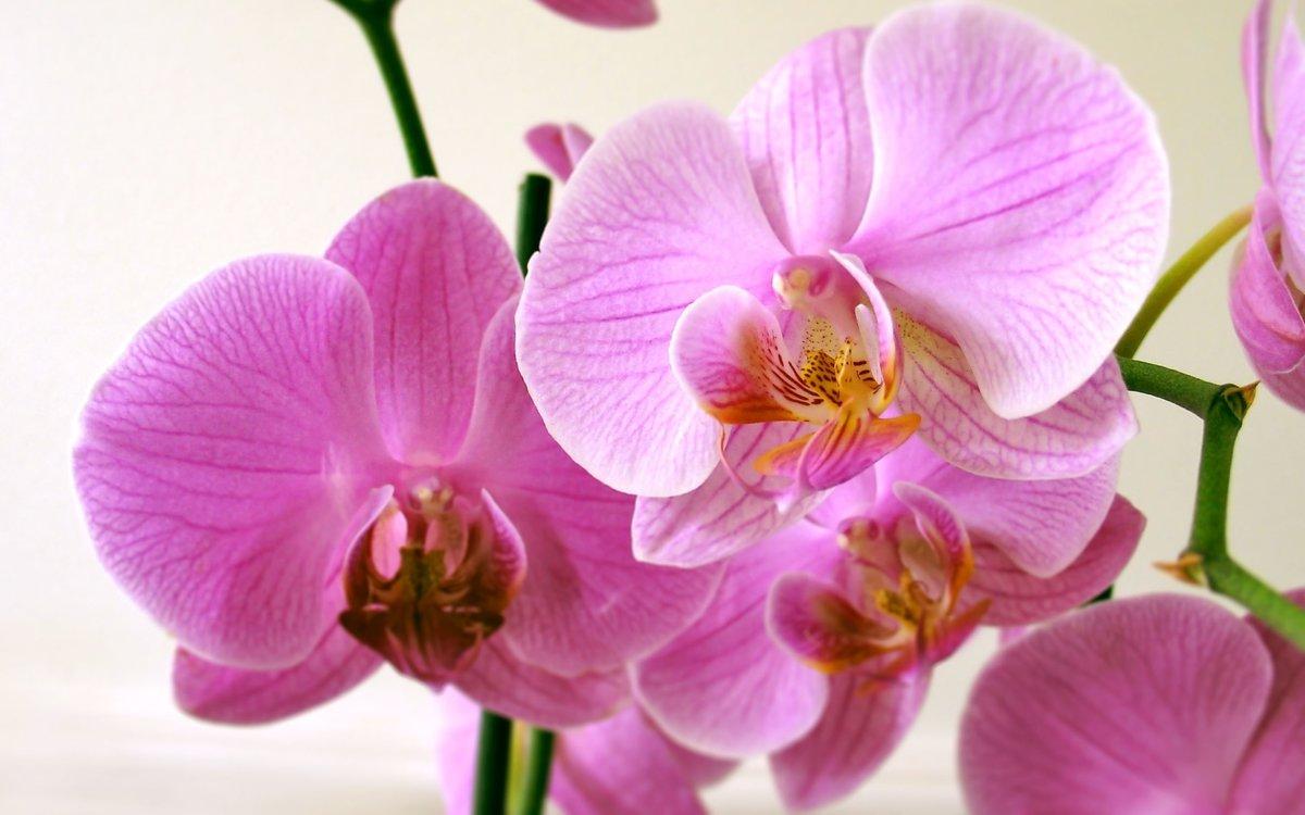 только сноубордисты, фото картинки орхидей предыдущем посте все